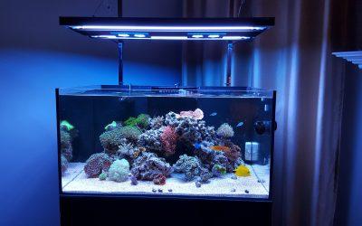 akvarium-bg